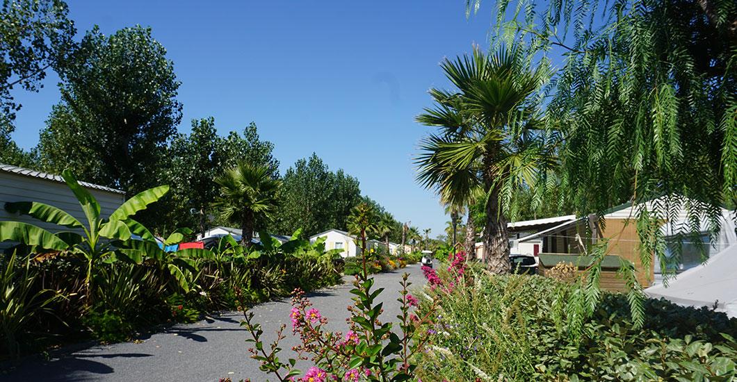 Allée de camping avec palmier, fleurs, bananiers et gravier