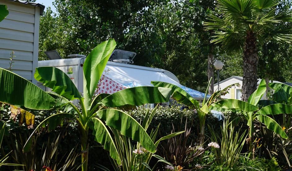 emplacement nu arboré avec arbre palmier bananier pour vivre en harmonie avec la nature