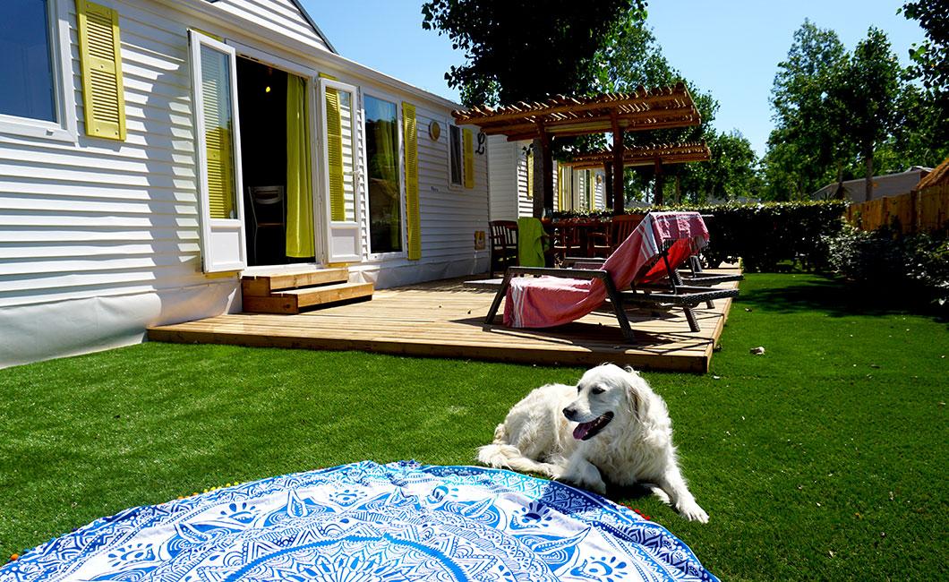 camping chien, animaux acceptés, vacances en famille avec animaux d compagnie domaine sainte cécile vias plagecamping chien, animaux acceptés, vacances avec animaux de compagnie domaine sainte cécile vias plage