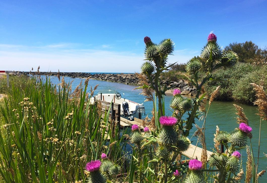 libron, fleurs sauvages, herbes folles, nature, bateau, pêche, poissons