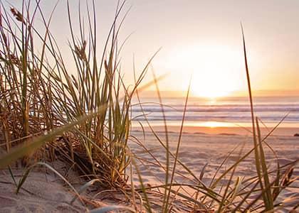 geluksschelp grens van Sainte Lucie op de stranden van Vias