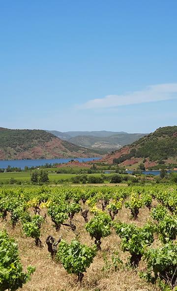 Salagou-meer, rode aarde, wijngaard, landschap te zien in het achterland van Zuid-Frankrijk