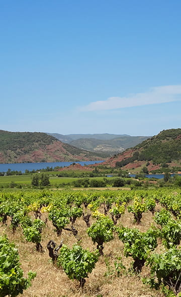 Lake Salagou, red soil, vineyards, landscape in the south of France hinterland